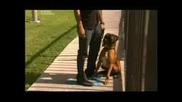 Говорещият с кучета - Сийзър Милан епизод 11