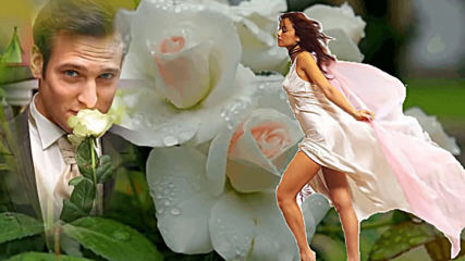 От белых роз сойти с ума. Так решила ты сама!