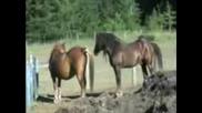 Horse Porn