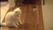 cat vs helicopter