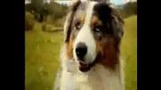 Кой Каза Че Кучето Е Приятел На Човека