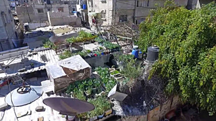Green rooftop farm in middle of Gaza's concrete jungle