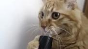 Смях!!! Котка си засмуква муцуната с прахосмукачка!!