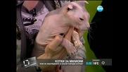 Котки за милиони - Здравей, България (24.04.2014г.)