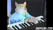Play Sheeba off. Keyboard Cat!