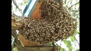 Bee swarm - 2010 - 3 /работа с Пророй/