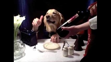 Куче пие вино!