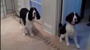 яко дресирани кучета