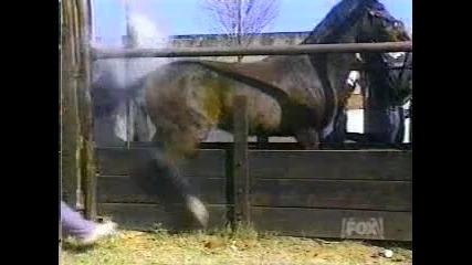 кон срещу човек