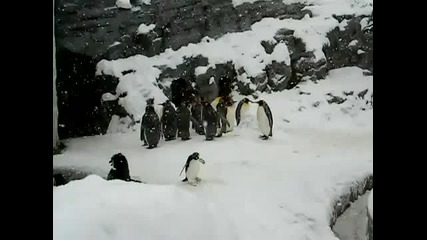 Пингвин на Гъбки