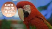 Папагал предрече новия шампион от Световното