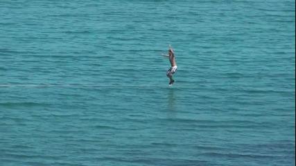 Slackline Лятна забава и баланс върху водата