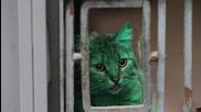 Зелената котка от Варна се е боядисвала и друг път с изоставена боя от строеж