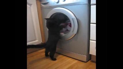 Тази котка е наистина много луда!!