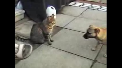 Куче Vs. Котка