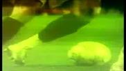 Роналдо - Носител На Златната Топка