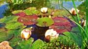 Царството на водните лилии!