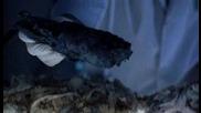 От Местопрестъплението: Маями - 1x05 - Пепел при пепелта - 2ч (бг аудио)