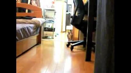 Телепортираща се котка :d