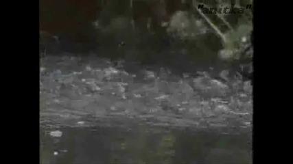Танцът На Алигаторите