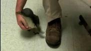 Да гъделичкаш малко пингвинче