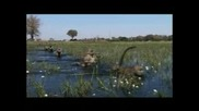 Planet Earth - Baboons In The Water