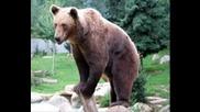 георги парцалев мечка