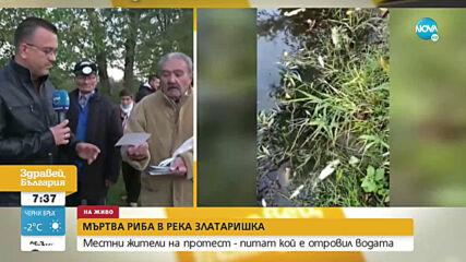 Жители на Златарица на протест заради мъртва риба