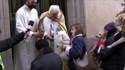 Spain: Hedgehogs, pot-bellied pigs get blessed by priest on St. Anthony day