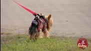 Летящото куче - скрита камера ( смях )