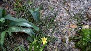 Земята побеля от леден дъжд в Разград
