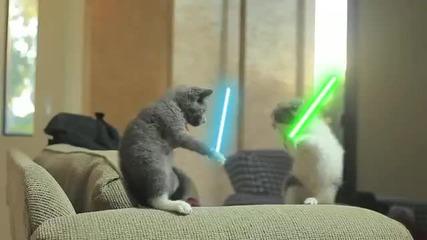 котенца джедаи - смях