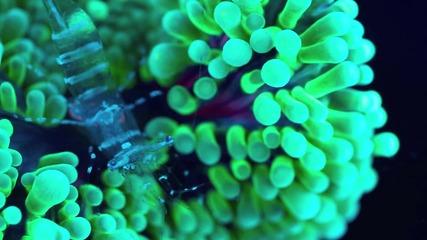 Прозрачно морско същество