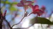 Kauai - Изгубеният свят