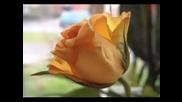 Crazy In Love - Julio Iglesias
