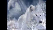 Bate Pesho Ft. Tina-wolf