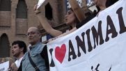 Spain: Hundreds protest court's decision to review bullfighting ban in Catalonia