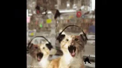 Котки Слушат Яко Рап