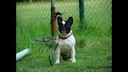 Куче Издава Странни Звуци