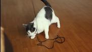 Котка срещу вентилатор