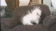 Наелектризирано куче - Смях