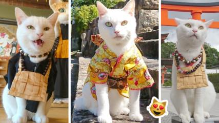 Междувременно в Япония: Котешки манастир приема поклоници, посреща ги бял котарак монах
