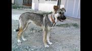 Кученце Красива Чъки