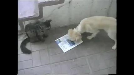 Котки се забавляват - компилация от смешни клипчета