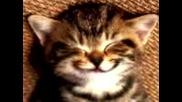 Коте Сънува Салам..