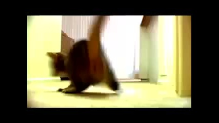 The Mean Kitty Song