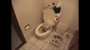 Котка ползва тоалетни чиния и хартия