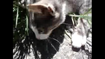 Коте В Тревата