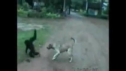 Смях!!! Маймуна се Закача с Куче