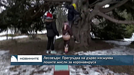 Лесовъди: Прегръдка на дърво изсмуква лошите мисли, свързани с вируса